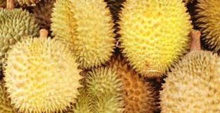 Potensi Buah Durian di Desa Bestala